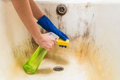Hands in blue rubber worker hand gloves hold sponge and spray with detergent clean bath tub covered in fungus, dirt and mold Royalty Free Stock Photo