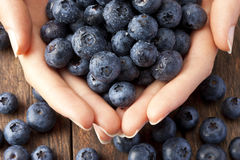 Hands Blueberries Healthy Food. Close-up of female hands holding blueberries on a rustic wood background Stock Photo