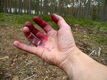 Hands after blueberry picking Stock Photo