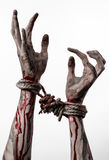 Hands bound,bloody hands, mud, rope, on a white background, isolated, kidnapping, zombie, demon. Hands bound,bloody hands, mud, rope, on a white background Royalty Free Stock Image