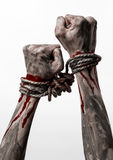 Hands bound,bloody hands, mud, rope, on a white background, isolated, kidnapping, zombie, demon Royalty Free Stock Photo