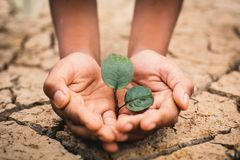 Hands of boy save little green plant on cracked dry ground Stock Photos