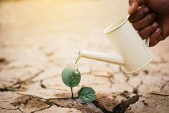 Hands of boy watering little green plant on crack dry ground Royalty Free Stock Photography