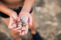 Hands of the boy in which are seashells royalty free stock image