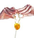 Hands breacking an egg. Stock Photos