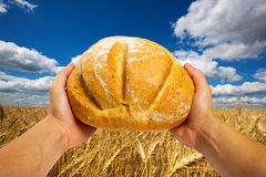 Hands with bread Royalty Free Stock Image