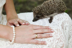 Hands of a bride with ring and hedgehog. Hands of a bride with a wedding ring lying on a dress with a little hedgehog in the background Royalty Free Stock Photography