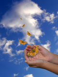 Hands and butterflies. A child hands cupped with five butterflies flying over a blue cloudy sky Royalty Free Stock Image