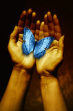 Hands with butterfly. Open female hands holding a blue butterfly Royalty Free Stock Photography