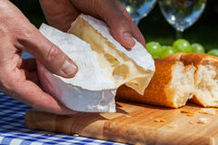 Hands with camembert cheese Stock Photography