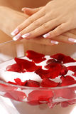 Hands care - rose petals bath. Beautiful hands with French manicure. beautiful female hands and bowl of water with rose petals stock photos