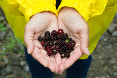 Hands carrying blackberries. Outdoors in yellow clothes Royalty Free Stock Photo