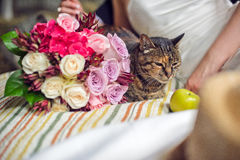 Hands, cat and a wedding bouquet Stock Image