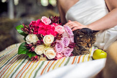 Hands, cat and a wedding bouquet Stock Photography