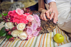 Hands, cat and a wedding bouquet Stock Images