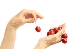Hands cherry stock photo