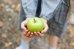 Hands of a child girl holding a green apple Royalty Free Stock Photography