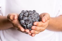 Hands of a child holding a bunch of grapes. Black grapes. Red grapes. Hands of a kid holding fruits. Daily portion of fruit in a c Royalty Free Stock Photo