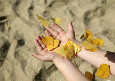 Hands of child and the leafs Royalty Free Stock Photos