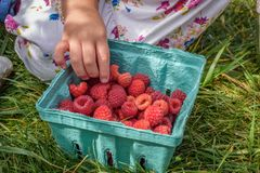 Child with fresh raspberries Royalty Free Stock Images