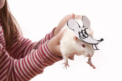 Hands Childl Hold Rat In A Mask Stock Photo