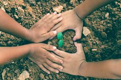 The hands of children are collaborating to grow forests back to nature, Wild plant concept.  stock photo