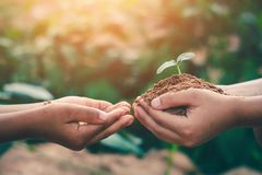 The hands of children are collaborating to grow forests back to nature, Wild plant concept.  royalty free stock photos