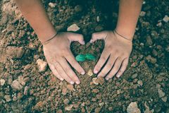 The hands of children are collaborating to grow forests back to nature, Wild plant concept.  stock images