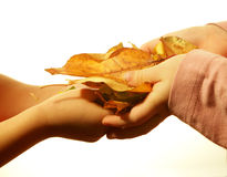 Hands of children with the leafs Royalty Free Stock Images