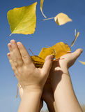 Hands of children and the leafs Stock Photography
