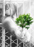 Hands of chimpanzees with green trees Royalty Free Stock Images
