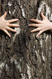 Hands clasp a tree trunk Royalty Free Stock Image