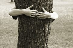 Hands clasping the tree. Preserve the nature stock photography