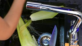 Peel the corn from the leaves. Hands clean the corn cobs from the leaves to the sink. Close-up stock video