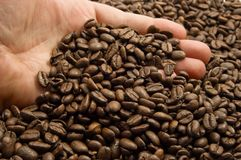 Hands with coffee beans. Hand and coffee beans - the real treasure Royalty Free Stock Photography