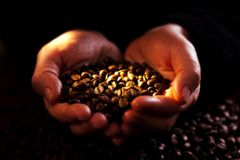 Hands with coffeebeans Stock Photography