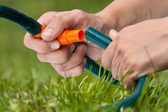 Hands connected garden hose to irrigate the lawn Royalty Free Stock Image