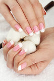 Hands with cotton crop Stock Images