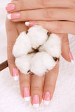 Hands with cotton crop Stock Image
