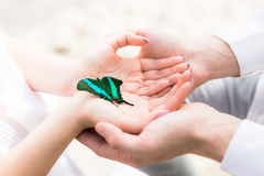 Hands of couple with butterfly Stock Photos