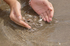 Hands and crabs. Female hands try to catch many small crabs royalty free stock photo