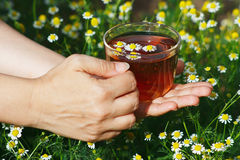 Hands with cup of herbal tea and chamomile Stock Photography