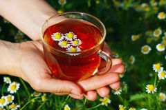 Hands with cup of herbal tea and chamomile Stock Photo