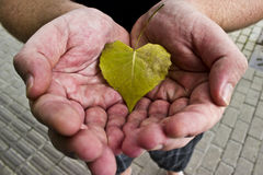 Hands Cupping Heart-shaped Leaf Royalty Free Stock Image