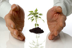 Hands cupping small plant Royalty Free Stock Images