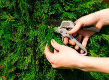 Hands cut a bush Stock Photos