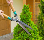 Hands cut bush clippers. Hands are cut bush clippers Royalty Free Stock Images