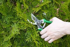 Hands are cut bush clippers Royalty Free Stock Photography