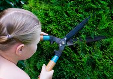 Hands are cut green bush clippers Stock Photo