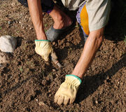 Hands De-Stoning Soil Stock Images